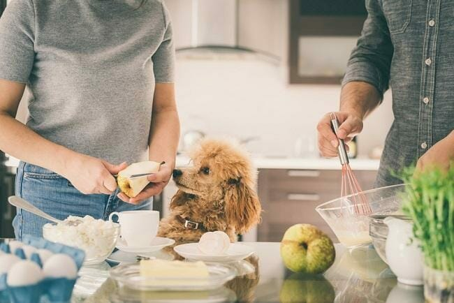 Are Pears Good for Your Dog