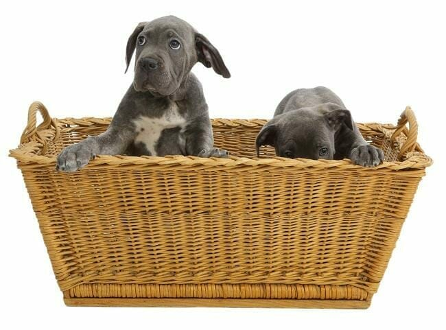 How Your Puppy Will Develop From Birth to Twelve Weeks