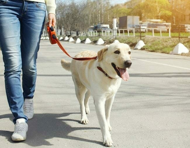How much should you get paid for dog walking