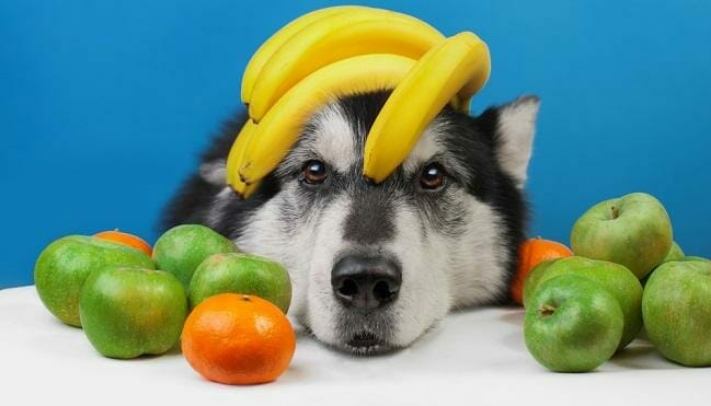 What Fruits and Veggies Can Doggies Eat