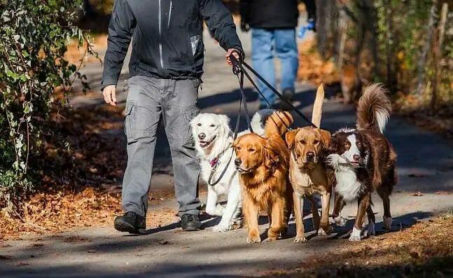 find-dog-walking-jobs-near-me