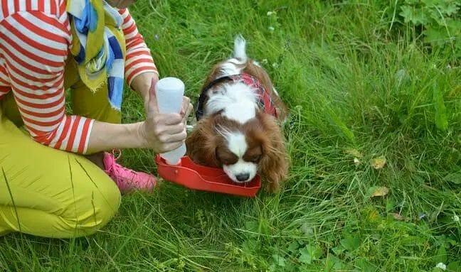 grooming-dog-water-dispenser