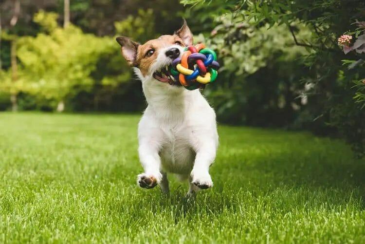 Are dog toys made of Kevlar safe