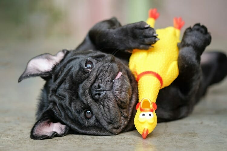 most-durable-kevlar-chew-toys
