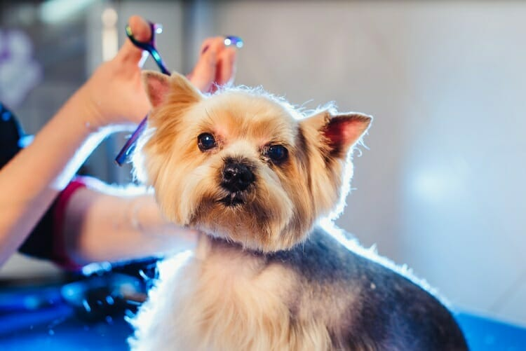 Dog Grooming Shears For The Money 2019
