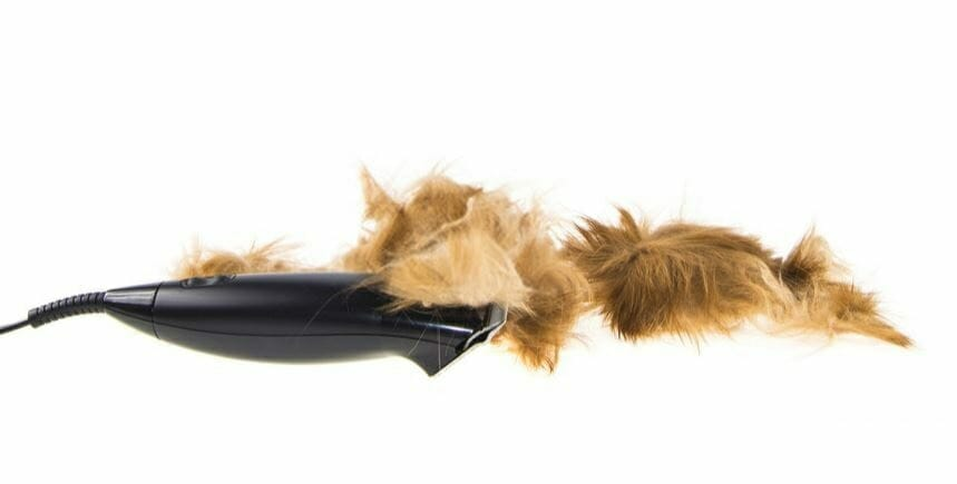Best Dog Clippers for Chihuahua