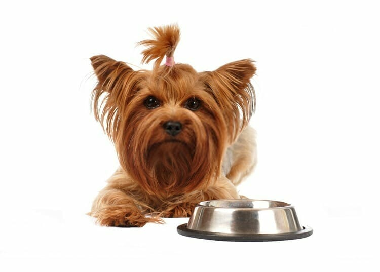 Wet Dog Food for Yorkies