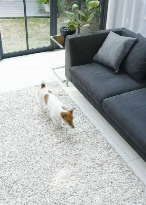 An uncluttered floor will help a blind dog find his way around