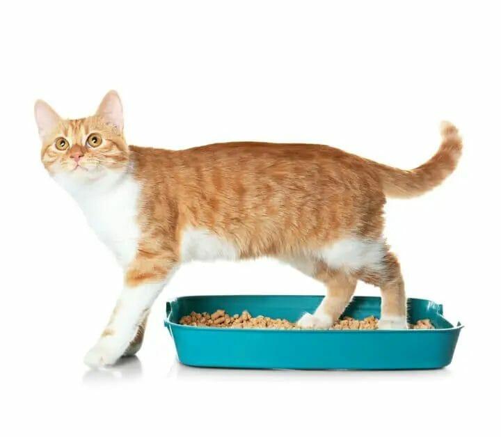 Best Cat Litter For Declawed Cats