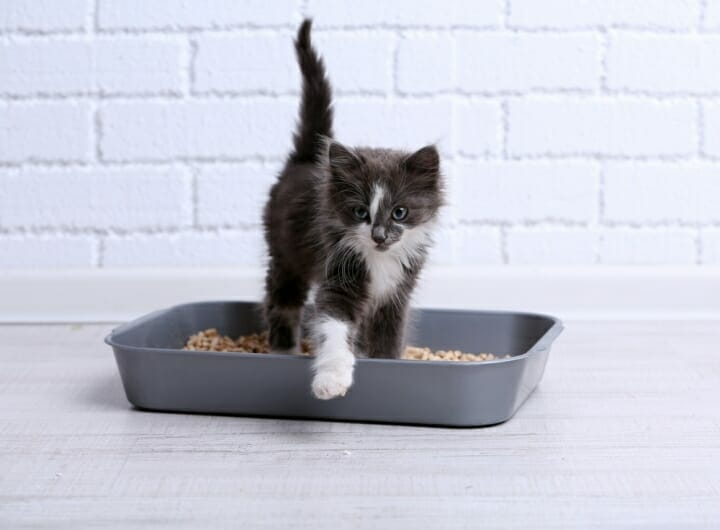 Best Cat Litter Without Dust