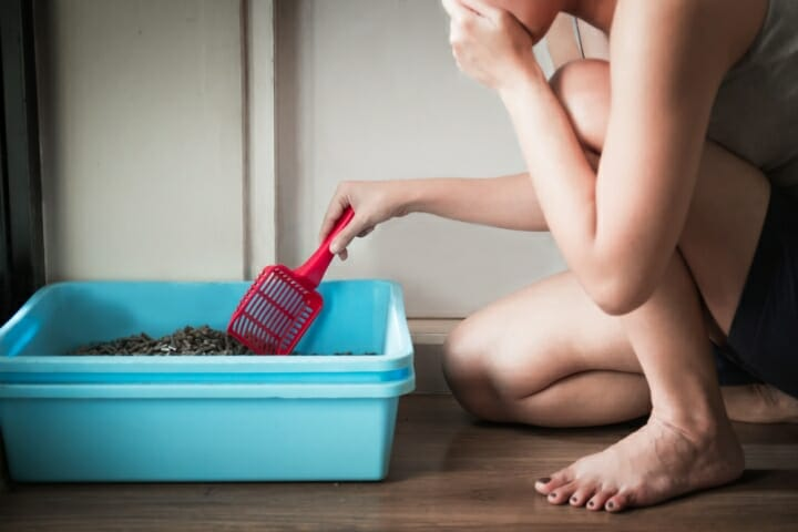 Best Cat Litter to Control Odor
