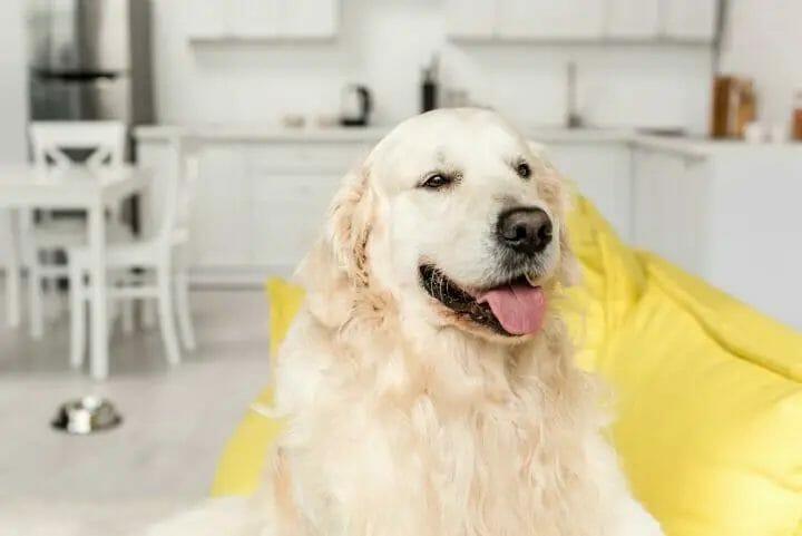 Dog at apartment
