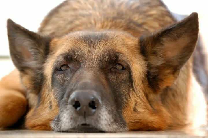 Best Dog Food For Elderly Dogs