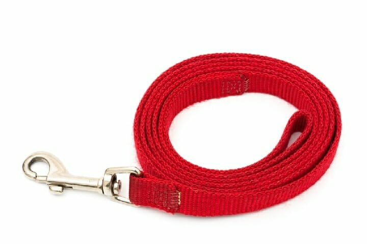 Best Leash For Blind Dogs
