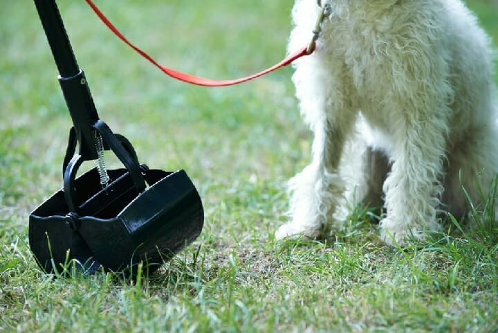 Best Pooper Scooper For Grass