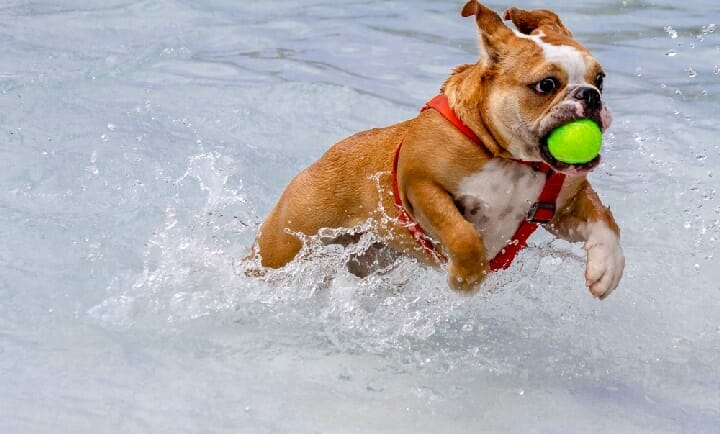 Best Automatic Ball Launcher For Dogs