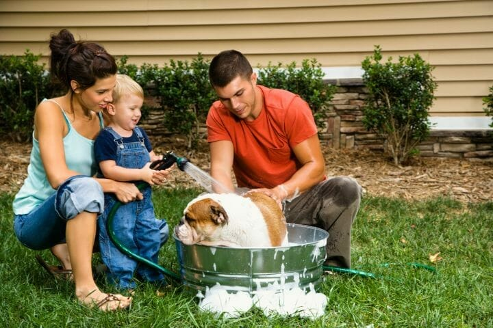 Best Bathtub For Large Dogs