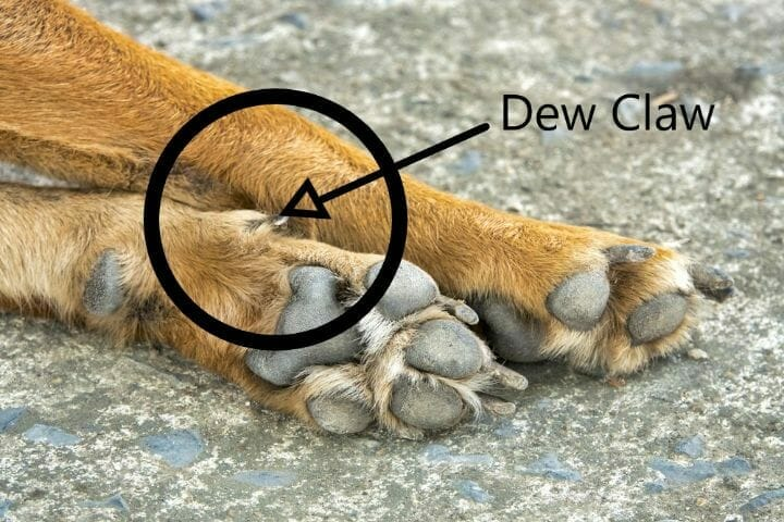 Best Dog Boots For Dew Claws