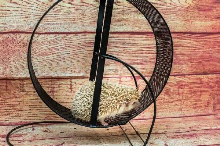 Best Exercise Wheel for Hedgehog