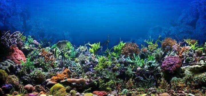 Best LED Light For Reef Tank
