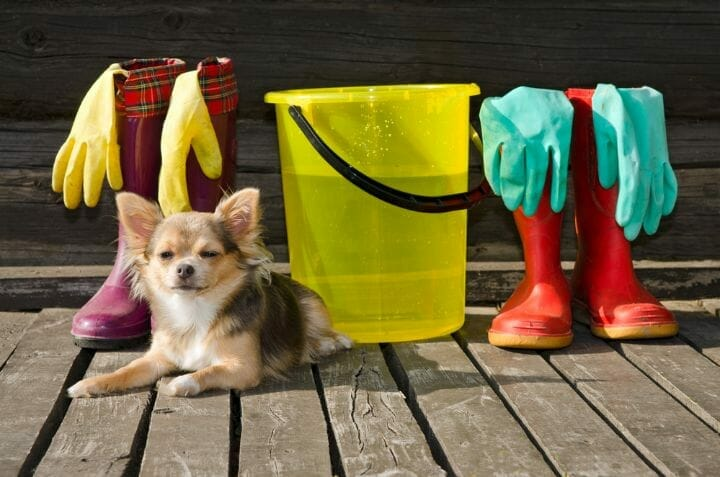 Best Portable Dog Washer In The UK