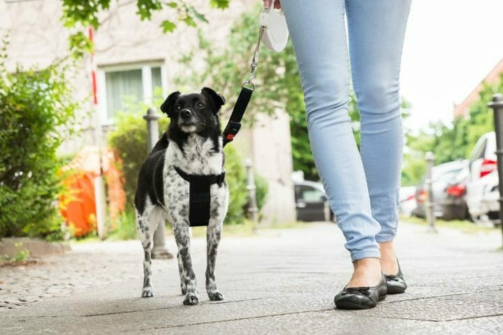 Best Retractable Dog Leash In Canada
