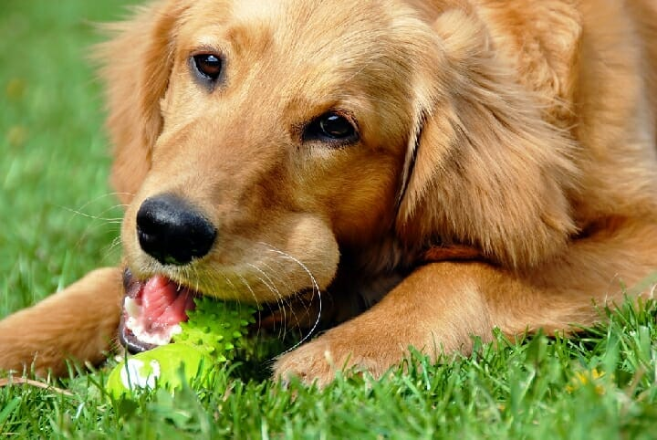 Best Toys For Cleaning Dogs Teeth