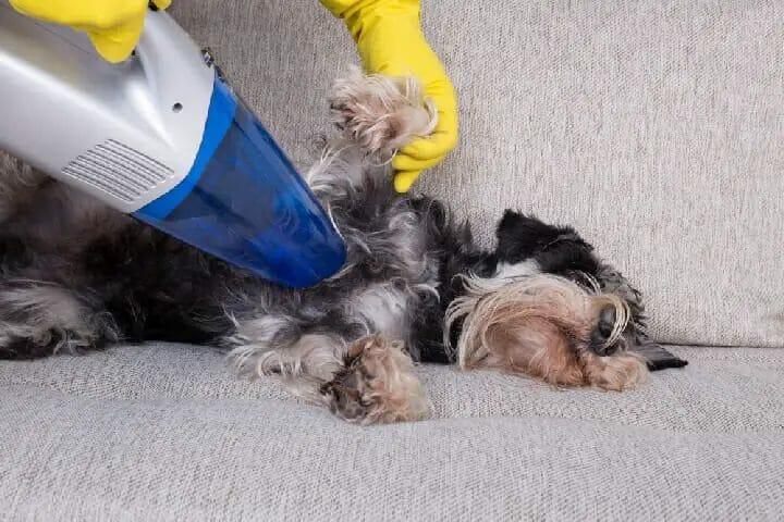 Best Vacuum for Pet Hair Under $150