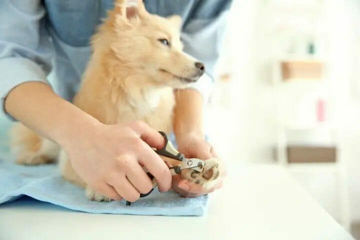 Cutting Dog Nails