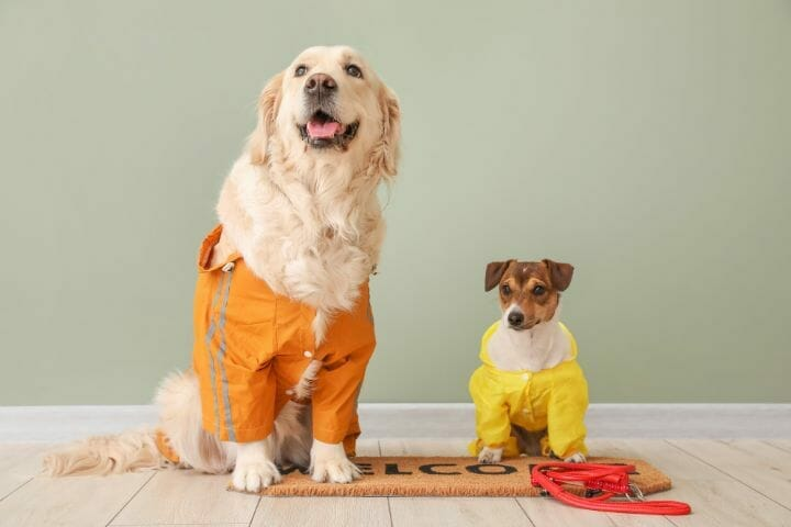 Best Raincoat for Large Dogs