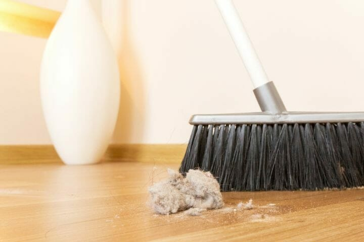 How to Get Pet Hair Out of Your Carpet
