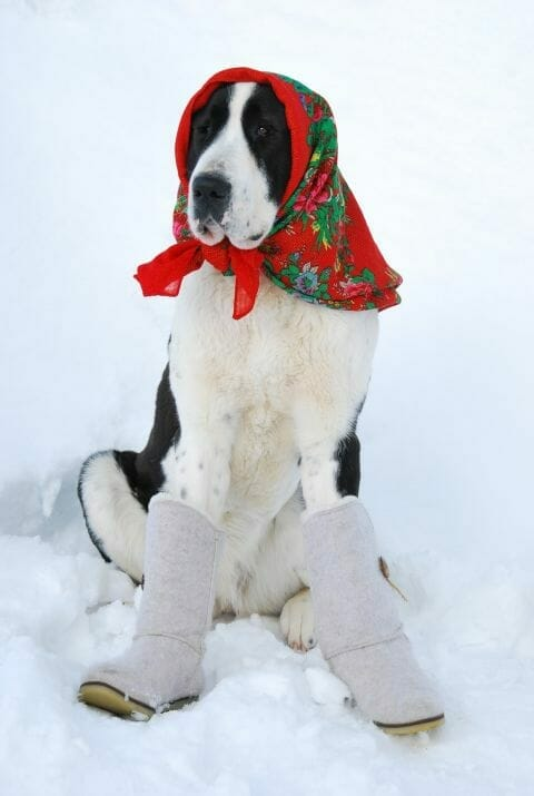 Winterboots for dog