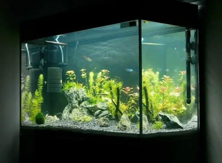 Best Aquarium Air Pump for Multiple Tanks