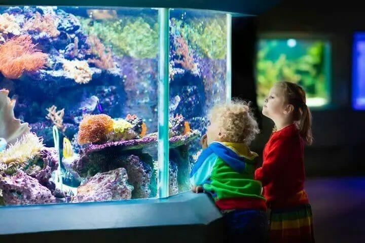 Best Aquarium Filter For 125 Gallon Tank