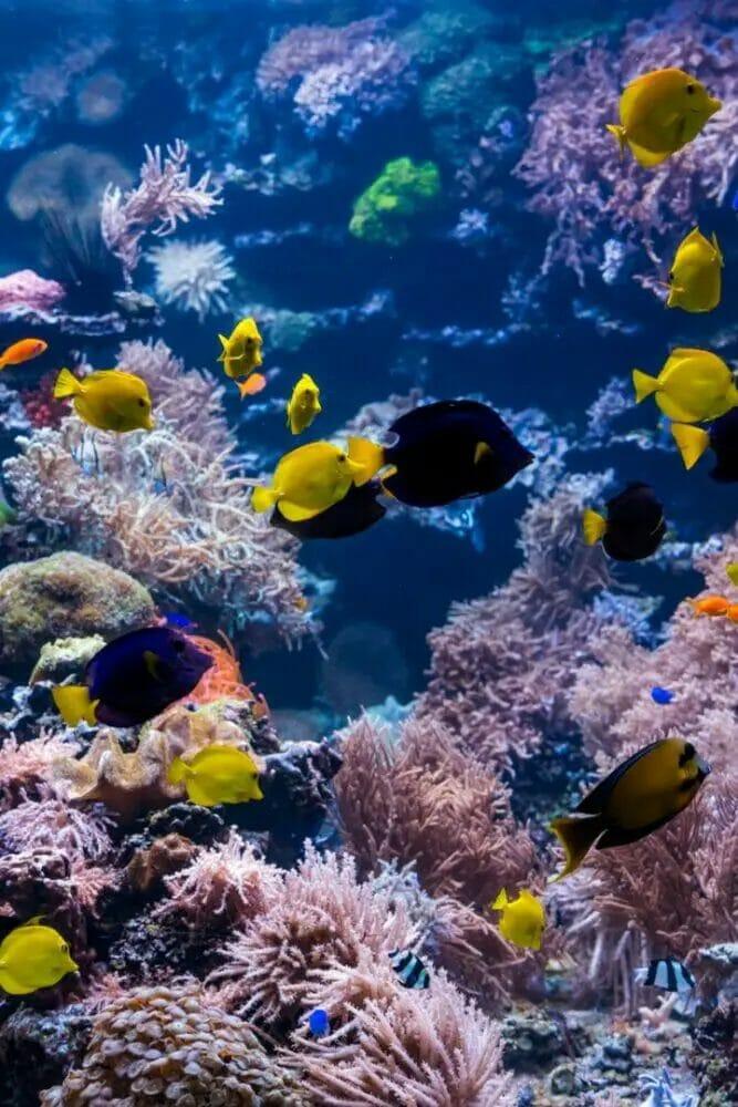 Best Aquarium Filter For 75 Gallon Tank