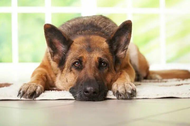 Best CBD Treats for Dogs with Arthritis