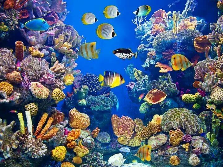 Best LED Aquarium Lighting For Fish Color