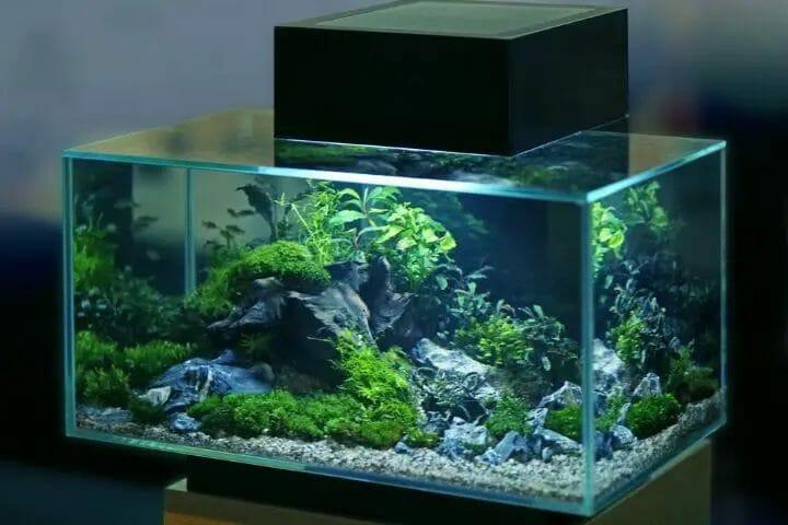 Best LED Aquarium Lights For Plants