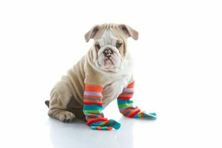 Best Dog Socks For Winter