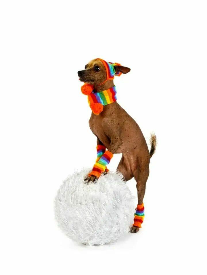 Best Dog Socks For Hardwood Floor