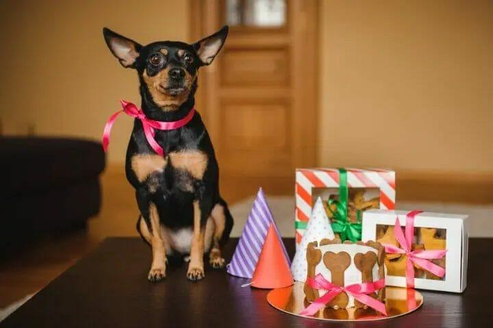 Best CBD Treats For Aggressive Dogs