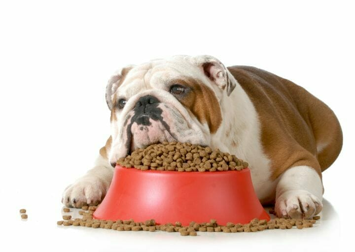 Dog with no appetite