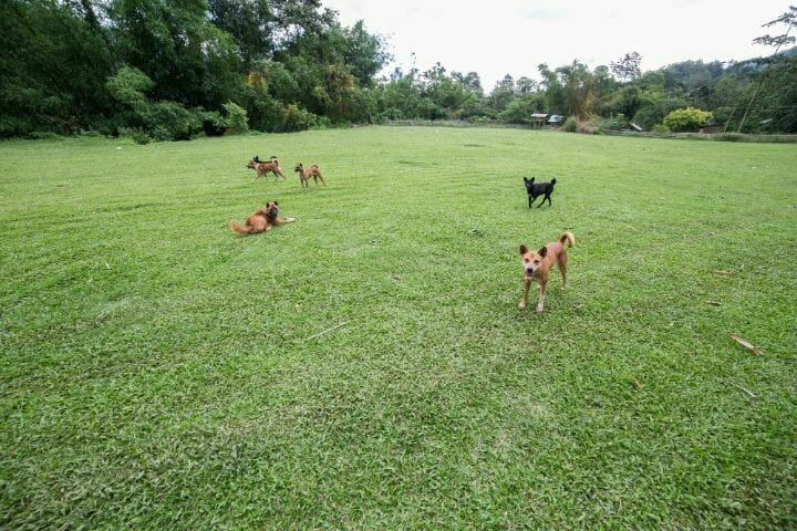 Dogs romp in the yard