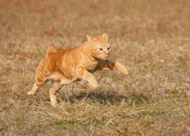 Running outdoor cat