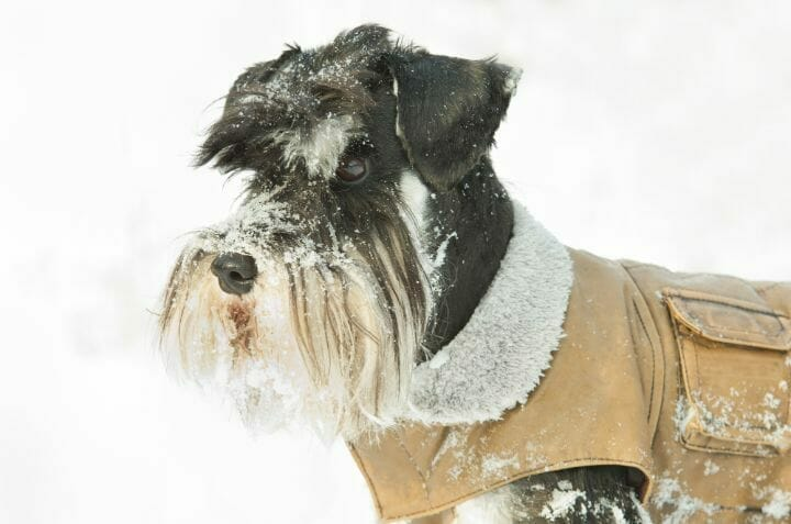 Winter Jackets for Small Dogs (2)