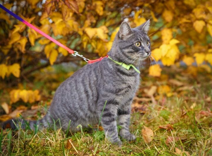 Cat on a walk in the park