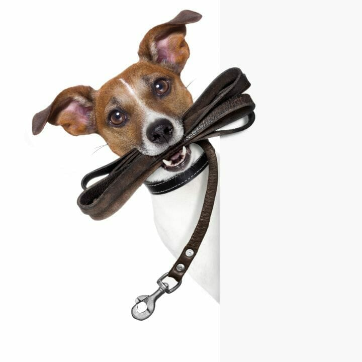 Shock Collars for Dog Chasing Cars