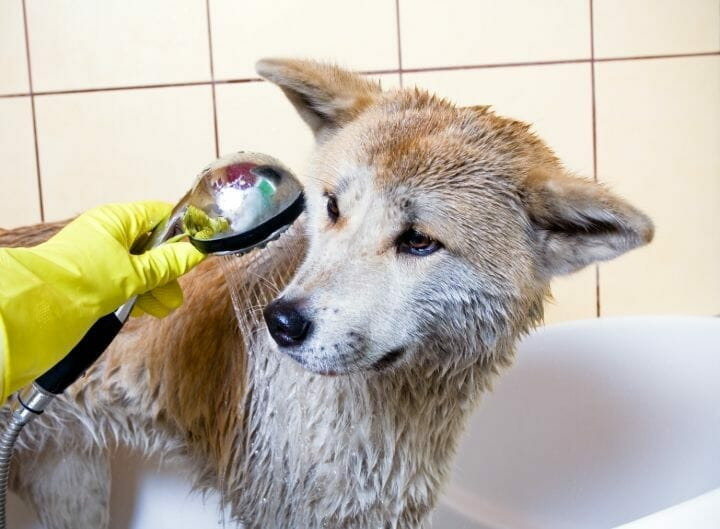 Handheld Shower Head for Dogs