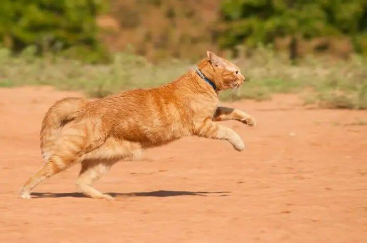 Outdoor Cat Running
