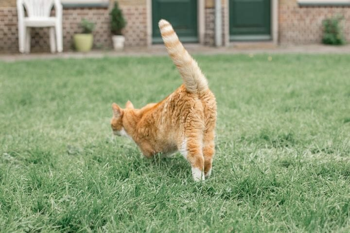 Cat playing Outdoor
